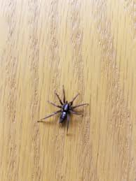 halloween city strongsville ohio house spiders of ohio seen these lately cleveland com