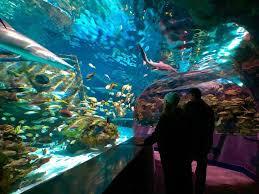 ripley u0027s aquarium tn ripleysaquagat twitter