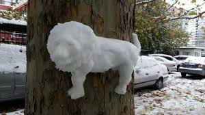 interesting snow sculptures appear on trees after snow in beijing