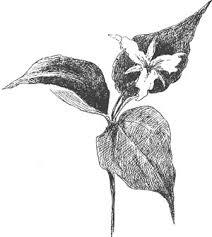 the project gutenberg ebook of juliana horatia ewing by horatia