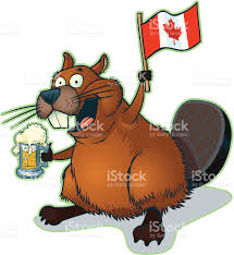 beer cartoon cartoon beaver with mug of beer and canadian flag stock vector art