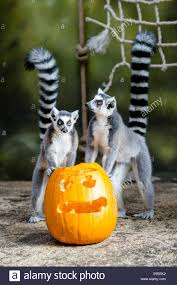 brookfield zoo hosts boo at the zoo halloween celebration 2016