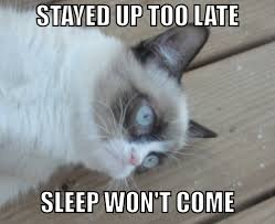 Memes Grumpy Cat - grumpy cat sleep won t come grumpy cat grumpy cat images and meme