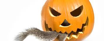 affordable wildlife control toronto raccoon u0026 squirrel control