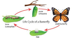 from a caterpillar to butterfly a journey of learning fiji sun