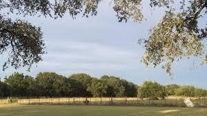 softened tree bill goes to gov greg abbott