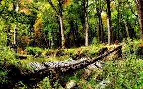 beautiful woods wallpaper 20369 1920x1200 px hdwallsource com