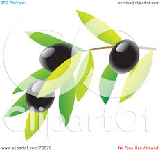 martini olives clipart royalty free rf clipart illustration of a branch with leaves and