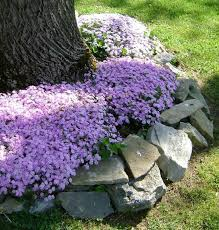 Best 25 Pebble Patio Ideas On Pinterest Landscaping Around by Best 25 Landscaping Around Trees Ideas On Pinterest Tree Base