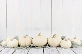 white pumpkins border of white pumpkins and leaves white wood background stock