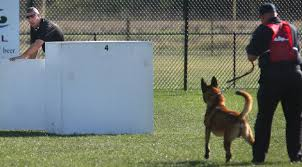 belgian malinois police national patrol dog field trials u2014 the visual journal