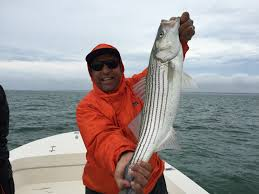 barnstable harbor fly and light tackle fishing charters