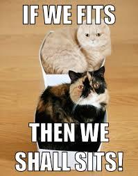Platypus Meme - cat meme by asianplatypus6 on deviantart