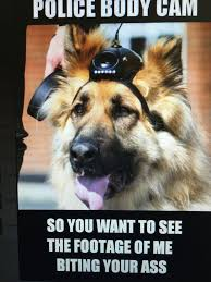 Law Dog Meme - 137 best warriors images on pinterest warriors a quotes and