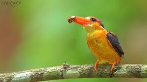 top 25 wild bird photographs of the week 59 u2013 national geographic