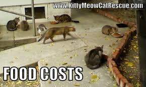 Wet Cat Meme - donations kitty meow cat rescue