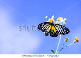 butterfly and blue sky stock images royalty free images vectors