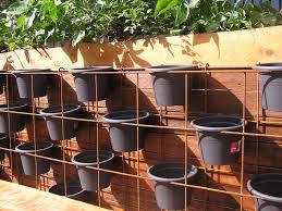 vertical garden herbs herb garden design plan pallet front yard