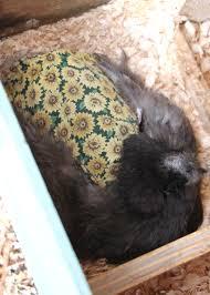 a backyard chicken first aid kit tilly u0027s nest