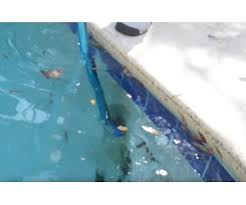 how to remove black algae from your pool inyopools com
