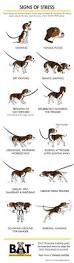 17 best pets images on pinterest dog care pet health and health