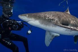 about cape cod shark diver