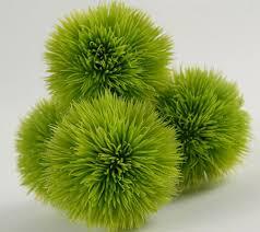 green allium grass balls 2 5in