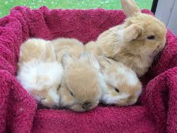 3919 best bunnies u0026 rabbits oh my images on pinterest bunny