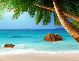 wallpaper tropical paradise beach palms sea ocean sunshine wallpaper tropical paradise beach palms sea ocean sunshine summer