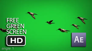 free green screen flying birds animated moving hd youtube