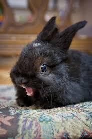 Ermahgerd Meme Creator - ermahgerd bunny meme generator imgflip