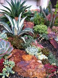 938 best succulents images on pinterest succulents