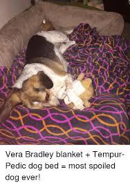 Tempur Pedic Dog Bed 25 Best Memes About Tempur Pedic Tempur Pedic Memes