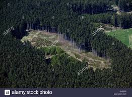 aerial view above stand of evergreen trees bavaria germany stock