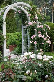272 best climbing roses images on pinterest gardens flowers and
