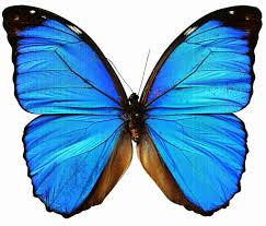 7 best images of butterfly prints free printables free printable