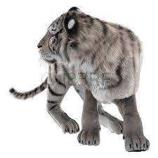 3d digital render of a white tiger fighting isolated on white