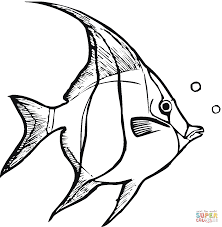 line drawings angel fish coloring page on decoration animal