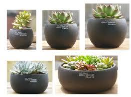 drum shape base concrete ceramic succulent garden planter pot vase