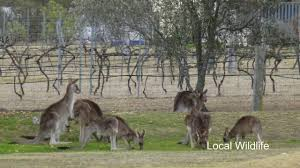 country style caravan park stanthorpe queensland australia