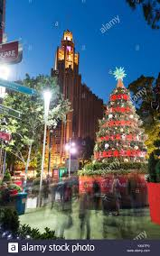 Real Christmas Trees Manchester Manchester Unity Stock Photos U0026 Manchester Unity Stock Images Alamy