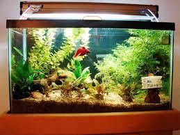 Realistic Fish Tank Decoration Ideas