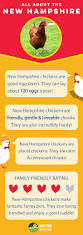 Backyard Chicken Coops Brisbane by New Hampshire Chickens Pinterest Hampshire And Rhode Island Red