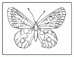 butterfly print coloring