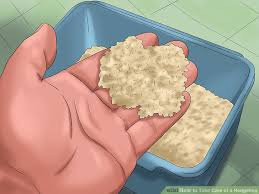 how to take care of a hedgehog with pictures wikihow