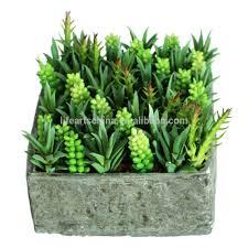 Succulent Plant Succulent Plants Tropical Plants Succulent Plants Tropical Plants