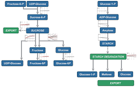 systems responses to progressive water stress in durum wheat