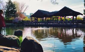 Arkansas travel diary images Cherry blossom tree viewing at kariya park in mississauga ontario jpg
