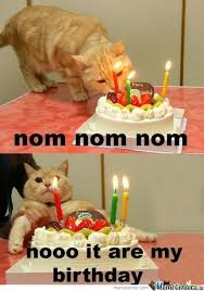 Birthday Meme Cat - a cat s birthday by recyclebin meme center
