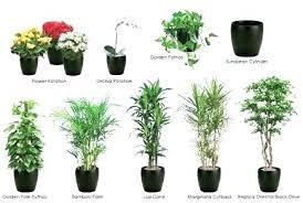 decorative indoor plants best indoor plant best indoor plant best indoor plants indoor plant